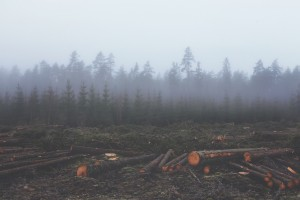 deforestation3